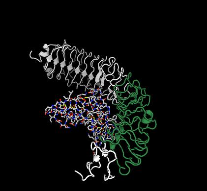 SynPharm ligand receptor complex